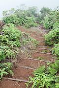 A steep hiking trail.