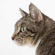 Cat photographed while waiting for adoption.  Pet photography by Michael Kloth.