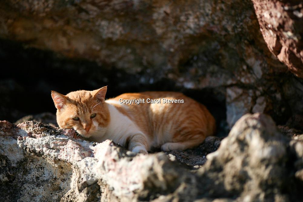 Ag. Antonis, Tilos, Dodecanese, Greece