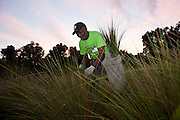 A Gullah sweet grass basket weaver harvests sweet grass to prepare for traditional baskets in Charleston, SC.