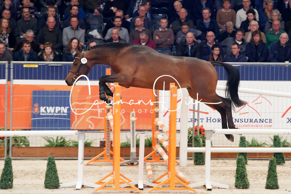 010, Kansas VDL<br /> KWPN Stallionshow - 's Hertogenbosch 2018<br /> © Hippo Foto - Dirk Caremans<br /> 01/02/2018010, Kansas VDL<br /> KWPN Stallionshow - 's Hertogenbosch 2018<br /> © Hippo Foto - Dirk Caremans<br /> 01/02/2018