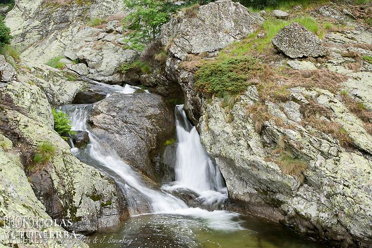 Torrent dans le parc national de Central Balkan, Bulgarie