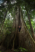 Kapok tree & Man<br />