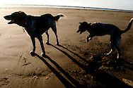 My dogs Lilly and Lobo playing at sunset on Pacific Beach, Washington.