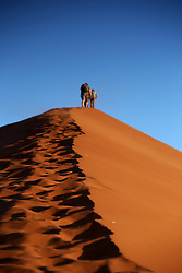 NAMIBIA SOSSUSVLEI 20APR14 - Tourists ascend Dune 45 in Sossusvlei, Namibia.<br /> <br /> Its name comes from the fact that it is at the 45th kilometre of the road that connects the Sesriem gate and Sossusvlei. Standing over 170m, it is composed of 5 million year old sand that is detritus accumulated by the Orange River from the Kalahari Desert and then blown here.<br /> <br /> jre/Photo by Jiri Rezac<br /> <br /> © Jiri Rezac 2014