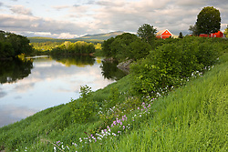 A farm on the banks of the Connecticut River in Newbury, Vermont.  Phlox.