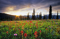 Spectacular wildflower meadows in the Selkirk Mountains, BC, Canada