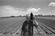 Victor DePinto, Vegetable Farmer