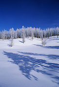 Image of trees in the snow in wintertime, Yellowstone National Park, Wyoming, Pacific Northwest