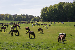 Manege Meerdaalhof - Oud Heverlee 2013<br /> © Dirk Caremans