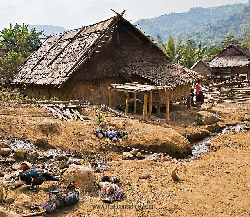 This small rural village in the far north of Laos sees few westerners. The people farm the rich soil and keep ducks and other livestock.<br /> (Photo by Matt Considine - Images of Asia Collection)