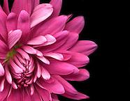 Fine Art Florals