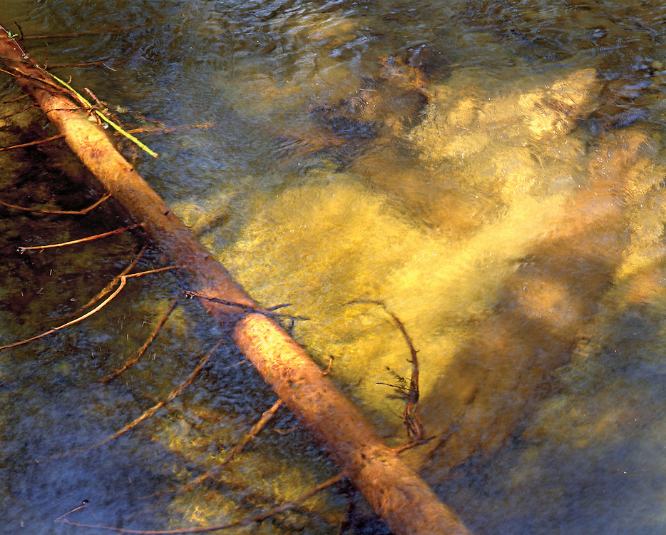 Abstract Portrait of Submerged Logs Under Rippling Water, Trapper Creek, Priest Lake, Idaho