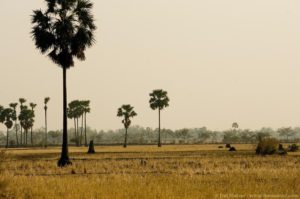 The countryside near Phnom Penh, Cambodia.