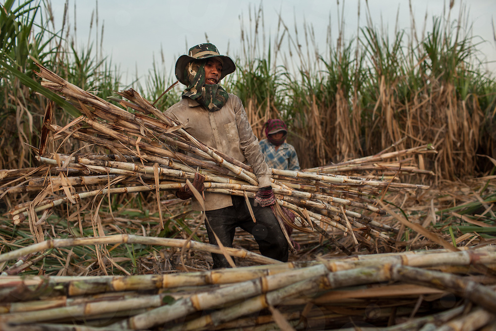 Sugar cane is harvested by a migrant worker on the Phnom Penh Sugar plantation. Omliang, Kampong Speu, Cambodia. 16 Feb. 2013. © Nicolas Axelrod / Ruom