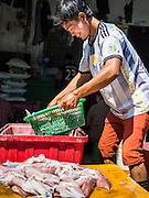 "11 JUNE 2015 - MAHACHAI, SAMUT SAKHON, THAILAND:  A Burmese migrant worker at the Samut Sakhon shrimp market in Mahachai cleans and sorts squid. Labor activists say there are about 200,000 migrant workers from Myanmar (Burma) employed in the fishing and seafood industry in Mahachai, a fishing port about an hour southwest of Bangkok. Since 2014, Thailand has been a Tier 3 country on the US Department of State Trafficking in Persons Report (TIPS). Tier 3 is the worst ranking, being a Tier 3 country on the list can lead to sanctions. Tier 3 countries are ""Countries whose governments do not fully comply with the minimum standards and are not making significant efforts to do so."" After being placed on the Tier 3 list, the Thai government cracked down on human trafficking and has taken steps to improve its ranking on the list. The 2015 TIPS report should be released in about two weeks. Thailand is hoping that its efforts will get it removed from Tier 3 status and promoted to Tier 2 status.       PHOTO BY JACK KURTZ"