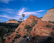 Sandstone formation with pine trees, cirrus clouds, Zion National Park, (medium format original) © 1999 David A. Ponton