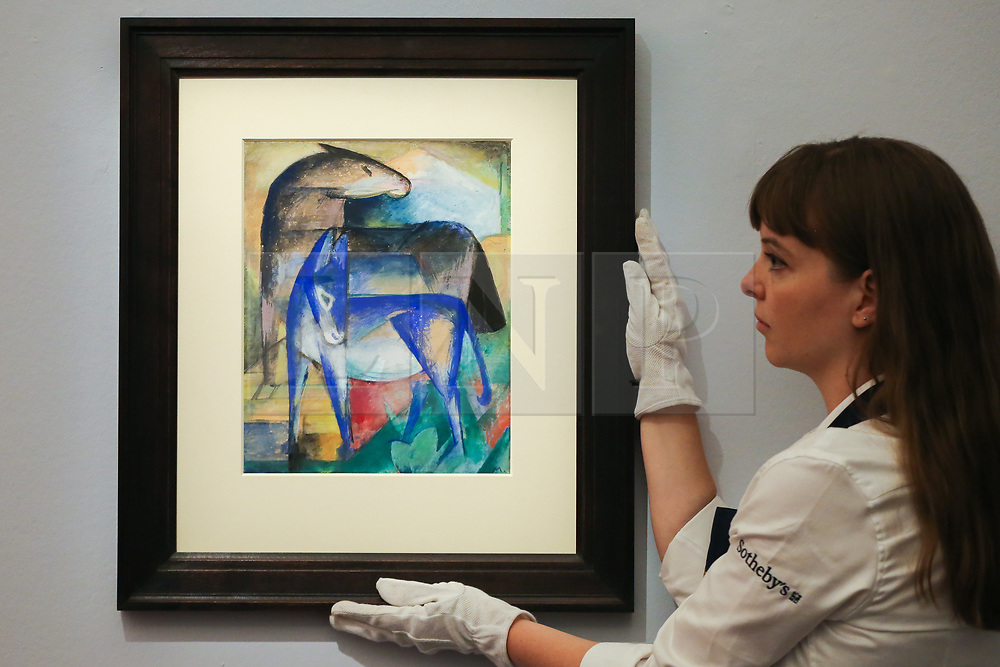 © Licensed to London News Pictures. 29/01/2020. London, UK. A technician hangs Franz Marc's paining titled Zwei blue Else (Pferd und Esel) (est £1m to £1.5m) at the preview of Sotheby's Impressionist, Modern and Surrealist art sales. The auction will take place at Sotheby's in central London on 4 and 5 February 2020. Photo credit: Dinendra Haria/LNP