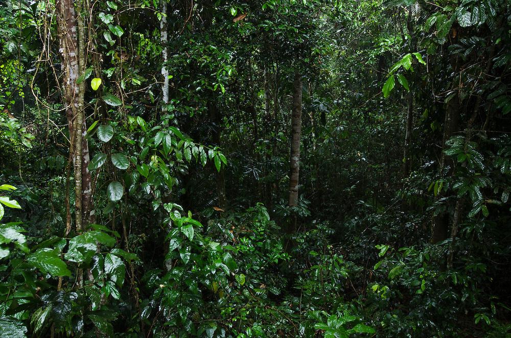 Rain in forest<br /> Yasuni National Park, Amazon Rainforest<br /> ECUADOR. South America<br /> HABITAT & RANGE: