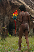Huaorani Indian - Megatowe Ontogamo with his pet scarlet macaw (Ara macao). Gabaro Community. Yasuni National Park.<br /> Amazon rainforest, ECUADOR.  South America<br /> Megatowe took the macaws as chicks from the nest and hand reared them - even feeding them from his mouth.<br /> This Indian tribe were basically uncontacted until 1956 when missionaries from the Summer Institute of Linguistics made contact with them. However there are still some groups from the tribe that remain uncontacted.  They are known as the Tagaeri and Taramanani. Traditionally these Indians were very hostile and killed many people who tried to enter into their territory. Their territory is in the Yasuni National Park which is now also being exploited for oil.