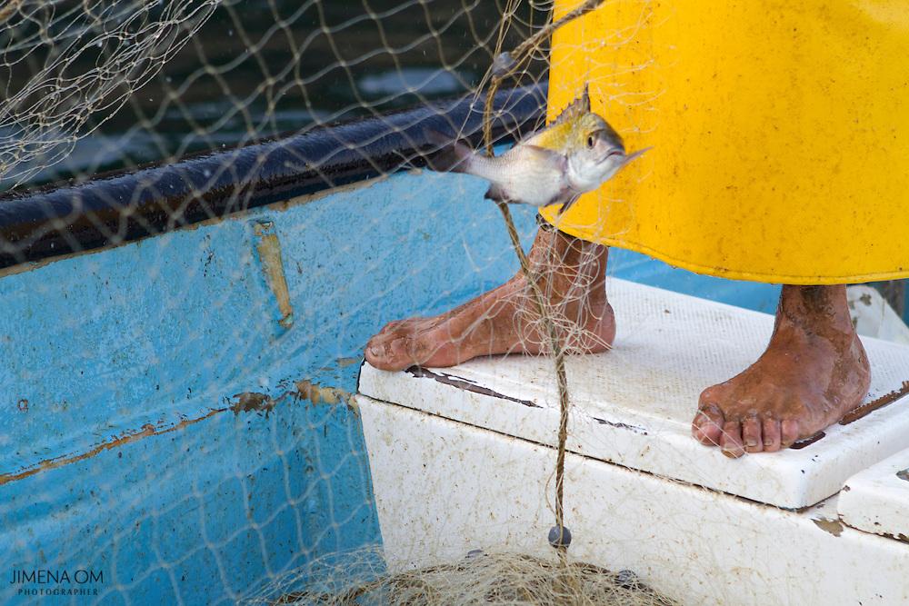 Un pez atrapado entre las redes del chinchorro a los pies de Jesús Jiménez. Los severos cambios en las temperaturas del mar en los últimos años, vuelven incierta la abundancia y variedad de la pesca.