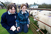 Teagasc's Science Week  saw secondary schools from County Galway attend Teagasc Athenry.  From Colaiste Mhuire Ballygar Emer Fallon Ballygar and Linda Carty, Dysart with some of the sheep on display Photo:Andrew Downes. Photo issued with compliments, no reproduction fee.