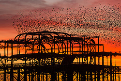 © Licensed to London News Pictures. 17/11/2017. Brighton, UK. Starlings murmuring over Brighton's West Pier as a colourful sky hangs over Brighton and Hove at sunset, today 17th November 2017. Photo credit: Hugo Michiels/LNP
