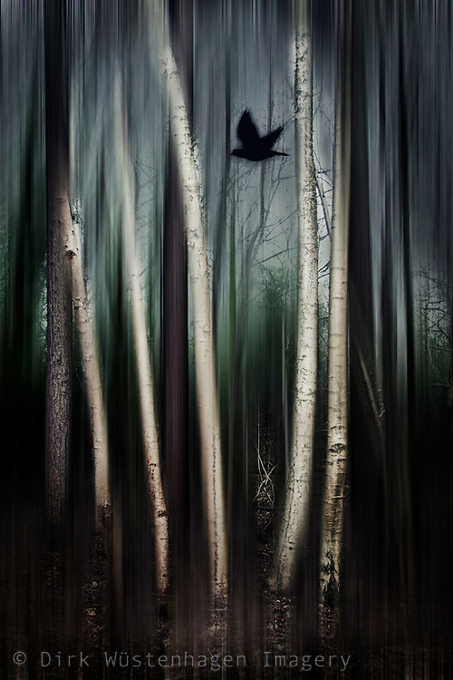 Abstraction of a birch tree forest with a flying bird<br />