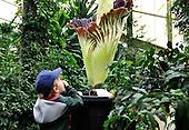 2010_10_27_Kew_Plant