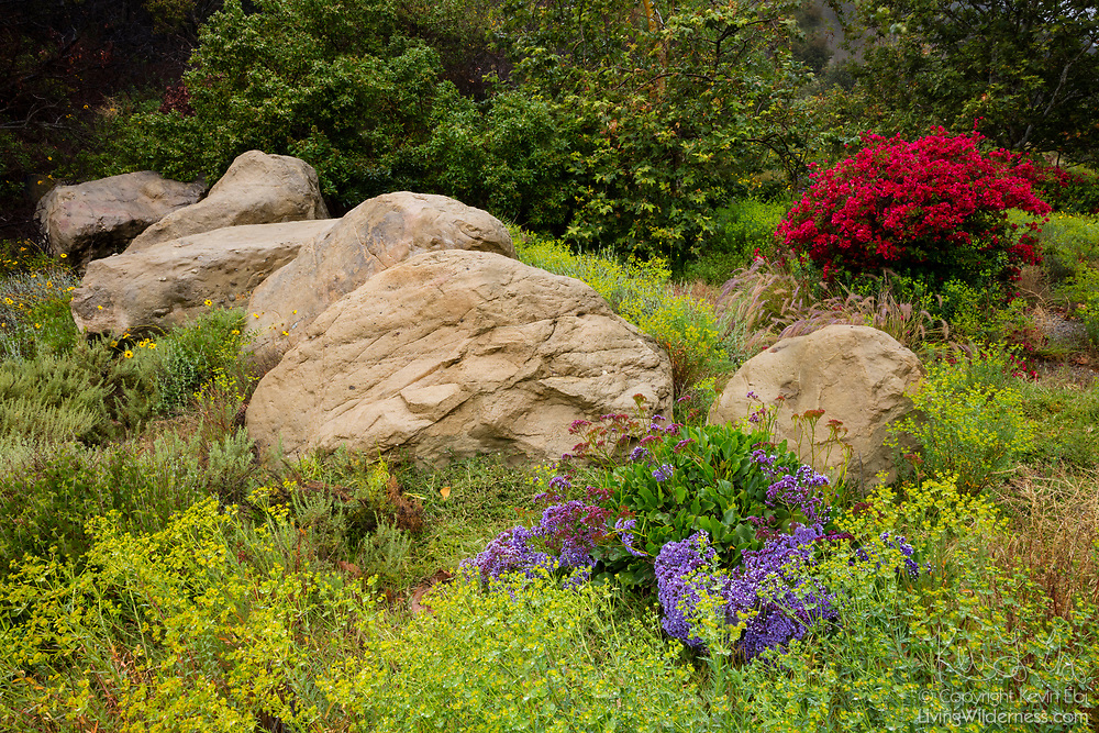 A variety of colorful spring flowers bloom among the large rocks in the bluffs of Malibu, California.