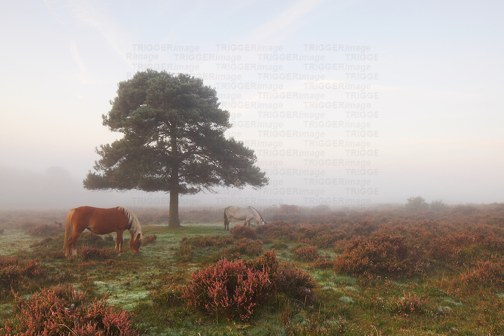 Tree and horse in mist at dawn