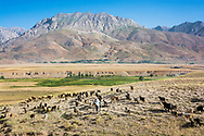 Munzur Valley, Turkey    - July 12, 2014 - A shepherdess leads her flock out to graze in the Munzur Valley. Traditionally, most families in the valley have depended on herding for their livelihood. CREDIT: Michael Benanav for The New York Times