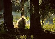 Porcupine, Denali National Park, Alaska