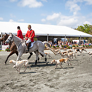 Live Oak Hounds at the Red Hills International Horse Trials in Tallahassee, Florida.