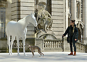 "© Licensed to London News Pictures. 05/03/2013. Westminster, UK. Dolly Feaver and her 9 and a half year old whippet ""Flint"" inspect the sculpture. The British Council - the UK's international organisation for educational opportunities and cultural relations - unveils a new sculpture, The White Horse by Mark Wallinger, outside its headquarters on The Mall in London, as it announces £7 million of extra investment in its work to connect the best of the UK's creative talent with the world. The statue, made of marble and resin, is a life-size representation of a thoroughbred racehorse. It has been created using state-of the-art technology in which a live horse was scanned using a white light scanner, producing an accurate representation of the animal. It will be on display for two years, before touring overseas. Photo credit : Stephen Simpson/LNP"