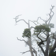 Dasyueshan Forest Recreation Area, Taichung, Taiwan