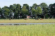 Kadoelerveld, Voorsterbos, Natuurmonumenten, Kraggenburg, Noordoostpolder, Flevoland