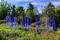 Neodymium Reeds, Dale Chihuly Exhibition (blown glass), Denver Botanic Gardens, Denver, Colorado USA.
