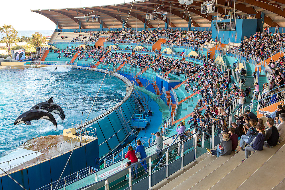 Spectacle des orques au Marineland d'Antibes // Orca show in Antibes marineland park