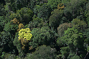 Rainforest Canopy<br /> <br /> GUYANA<br /> South America