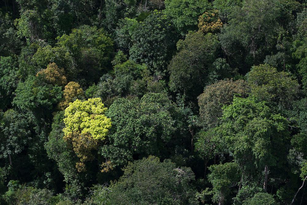 Rainforest Canopy<br /> <br /> GUYANA<br /> South America