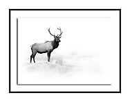 Black and white wildlife, fine art photography