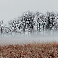 https://Duncan.co/trees-and-reeds-in-the-fog-04