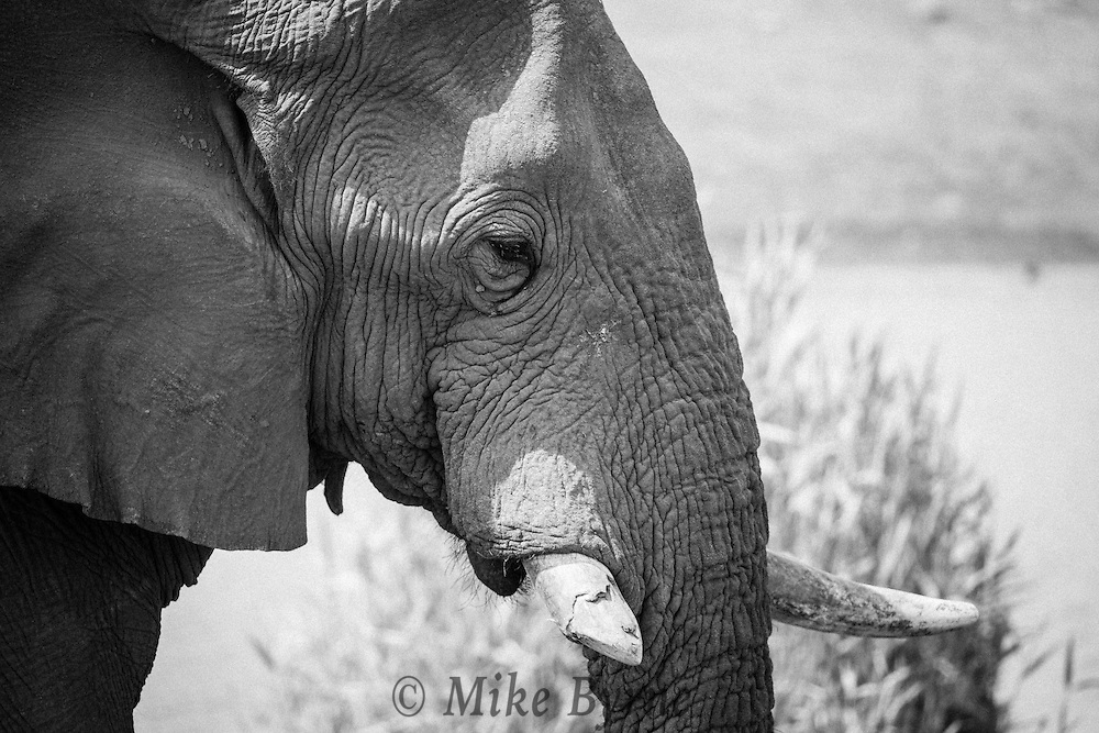 Elephant in Etosha National Pakr, Namibia.