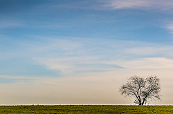 lone tree in a field in The hamptons