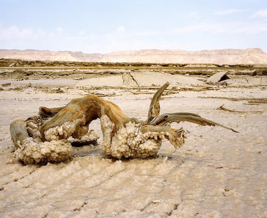 Tout chose laissée au bord de la Mer Morte est recouverte d'une épaisse couche de sel en un à deux mois de temps. La Mer Morte, alimentée par le Jourdain, est un lac d'eau salée d'une surface approximative de 810 km2, partagé entre Israël, Jordanie et Territoires Palestiniens occupés. La salinité de la Mer Morte est de 27,5 % alors que celle de l'eau de mer oscille entre 2 et 4 %. La Mer Morte est le point le plus bas du globe à 417 mètres sous le niveau de la mer. Son niveau d'eau baisse d'un mètre par an en moyenne. Écologie, Économie et géostratégie y sont continuellement un peu plus fragilisés. Israël, mai 2011