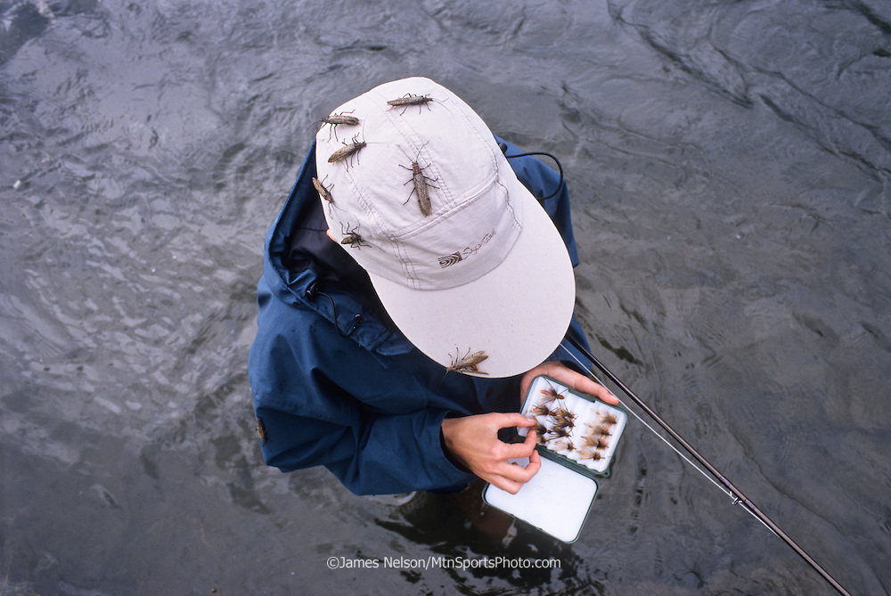 Barb Nelson chooses a fly from her fly box as salmon flies (a.k.a., stone flies) crawl on her hat while she fishes on the Henry's Fork (a.k.a., North Fork), Idaho.