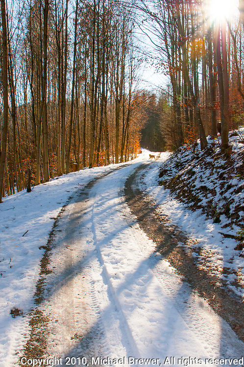 Sunlight and shadows streaming across a snowy forest road in Aargau, Switzerland.