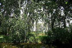 UK ENGLAND WILTSHIRE 26JUN08 - The river Kennet near Stichcoombe in rural Wiltshire, western England...jre/Photo by Jiri Rezac / WWF UK..© Jiri Rezac 2008..Contact: +44 (0) 7050 110 417.Mobile:  +44 (0) 7801 337 683.Office:  +44 (0) 20 8968 9635..Email:   jiri@jirirezac.com.Web:     www.jirirezac.com..© All images Jiri Rezac 2008 - All rights reserved.