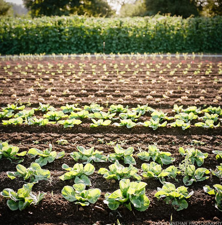 Persephone Farm in Lebanon, Oregon